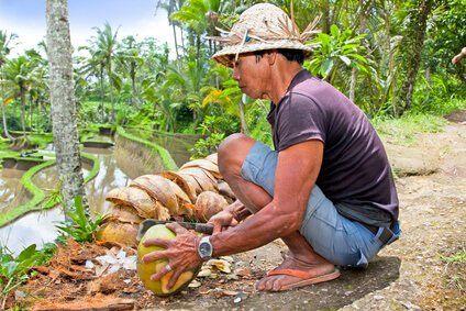 Kokosöl aus Sri Lanka