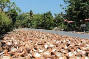 Kokosöl Indonesien
