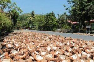 Kokosöl aus Indonesien