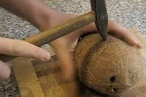 kokosnuss oeffnen
