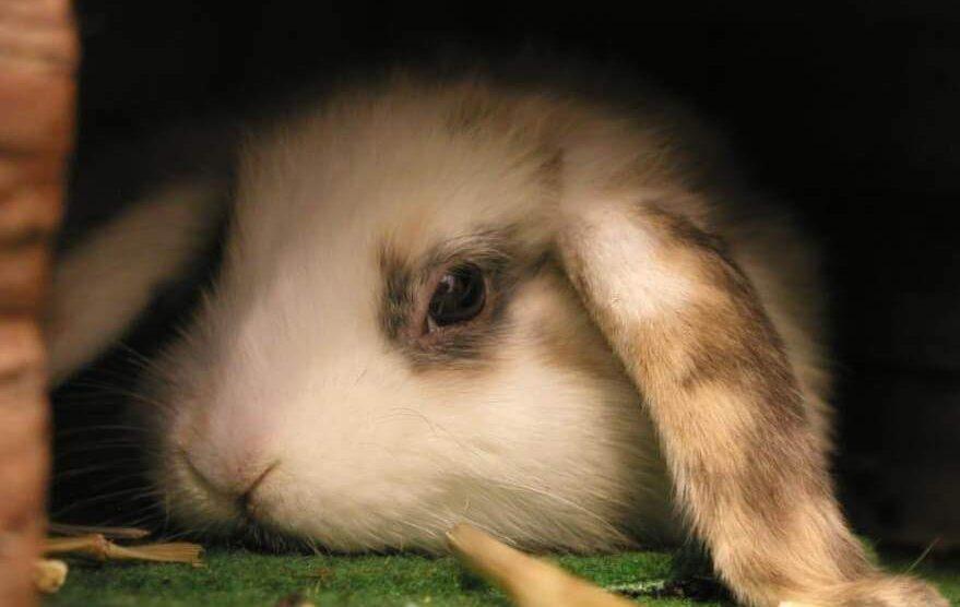 Kokosöl Kaninchen