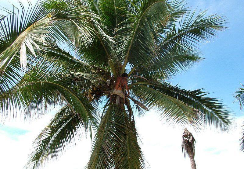 Kokosöl aus Thailand