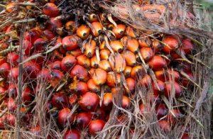 Kokosöl ist kein Palmöl