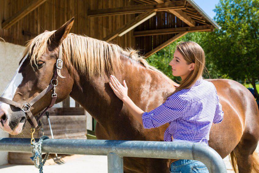 kokos l pferd schutz und pflege f r ihren freund. Black Bedroom Furniture Sets. Home Design Ideas