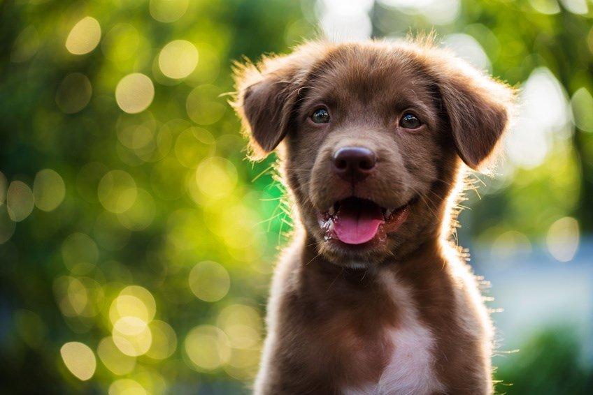 Kokosöl für den Hund