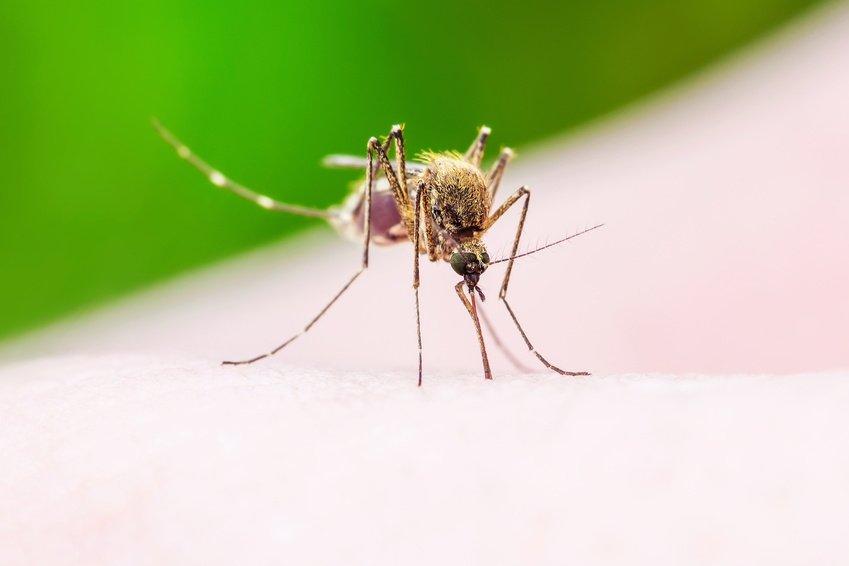 Natürliche Insektenabwehr